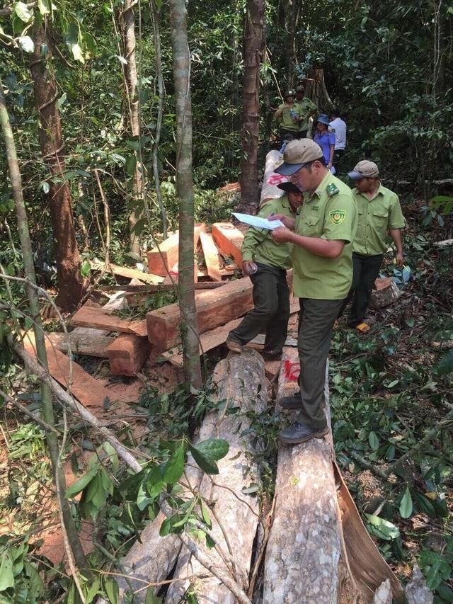 Hiện trường vụ phá rừng phòng hộ (ảnh VKSND)