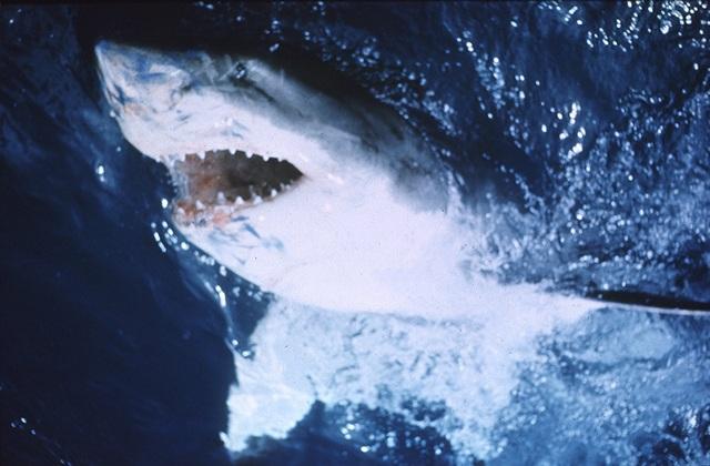 """Một trong những bộ phim quái thú đáng xem chính là """"Hàm cá mập"""""""