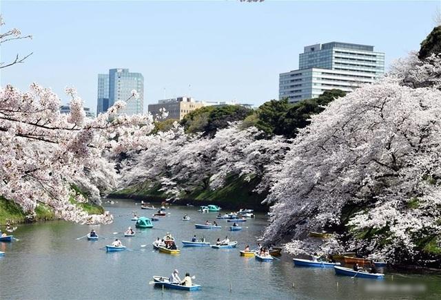 Ngất ngây trước cảnh hoa anh đào nở rộ, cánh hoa phủ sông hồ ở Tokyo - 7