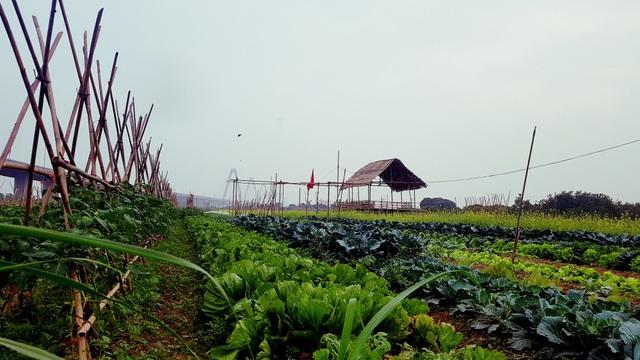 Gọi là trồng rau ảo nhưng thực tế người dùng vẫn phải bỏ ra khoảng 1 triệu - 3 triệu/ tháng để thuê mảnh vườn thật bên ngoài. Tuy nhiên, hàng ngày họ không phải đến tận vườn chăm sóc mà chỉ cần thực hiện các lệnh qua điện thoại