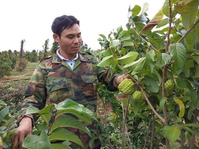 Người dân đổ xô trồng xen canh cây ăn quả