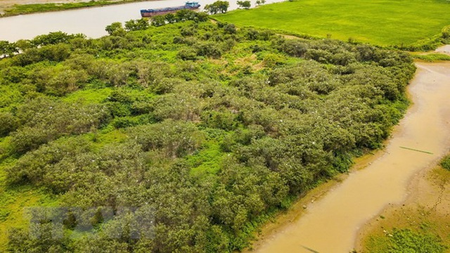 Đảo cò là một bãi bồi lớn nằm bên sông Hoàng Long. (Ảnh: Minh Đức/TTXVN).