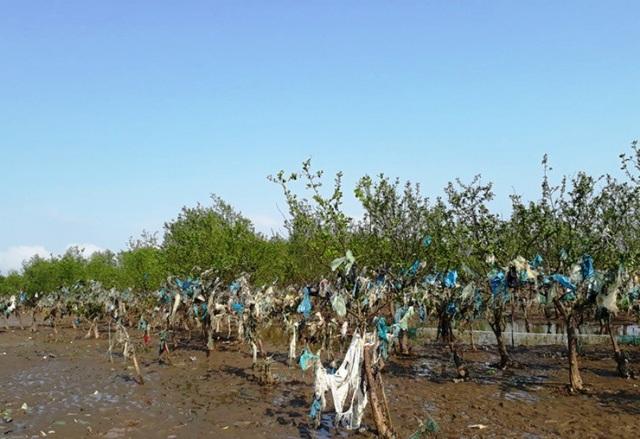 Cả một cánh rừng ngập tràn rác thải, trong đó có nhiều cây đã bị chết khô.