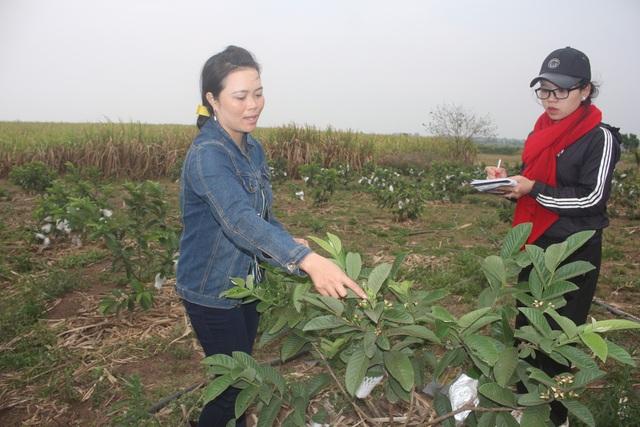 Chị Trần Thị Cảm chia sẻ kinh nghiệm trồng cây ăn quả trên đất cằn