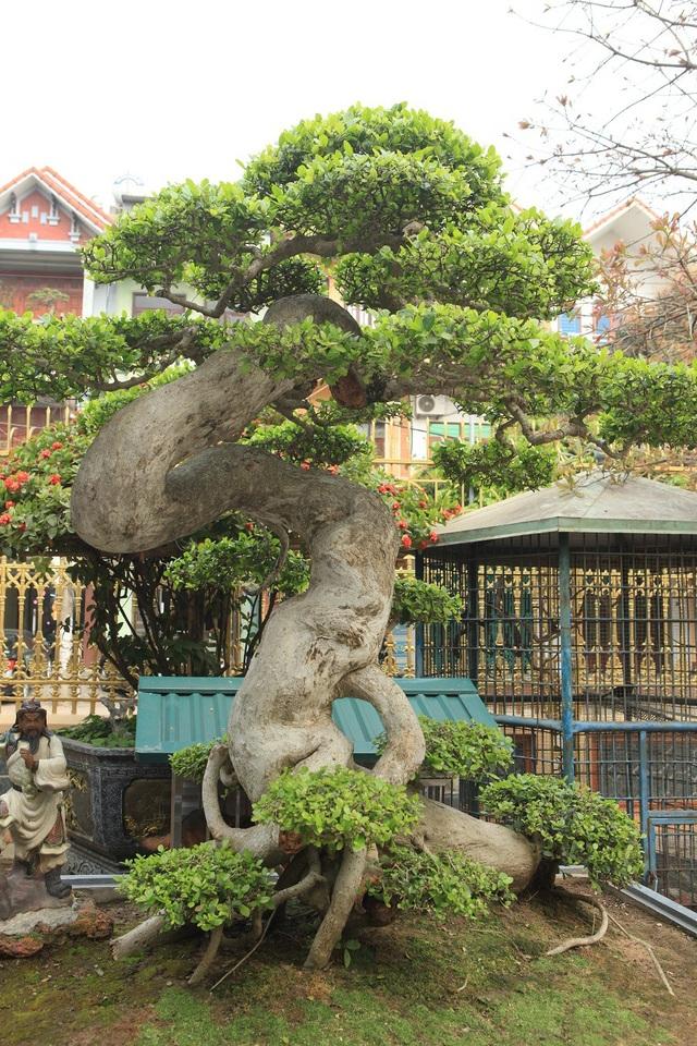 Từ khi sở hữu cây duối cổ hình chữ Tâm, anh Toàn đón rất nhiều lượt khách trong và ngoài nước đến tham quan, thưởng lãm, trong đó nhiều đoàn khách của Đài Loan, Trung Quốc… ngỏ ý muốn mua cây nhưng anh chưa bán.