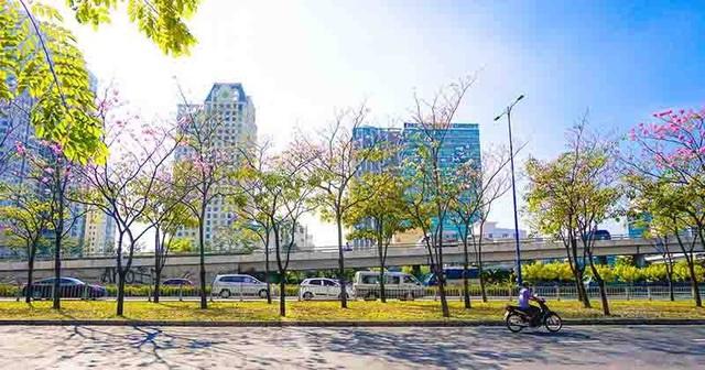 Có một Sài Gòn mộng mơ mùa hoa kèn hồng nở rộ - 2