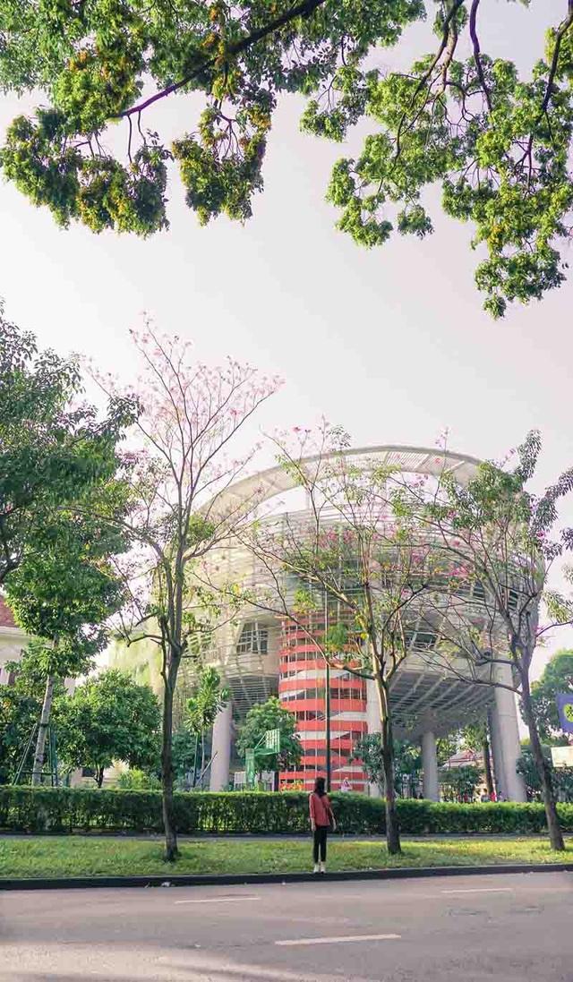 Có một Sài Gòn mộng mơ mùa hoa kèn hồng nở rộ - 5