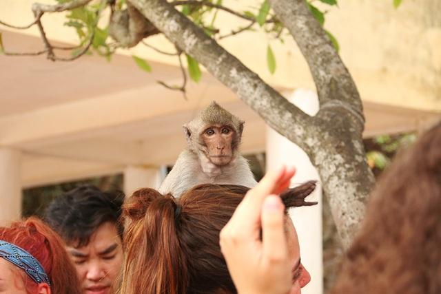 Du khách thích thú vui đùa với khỉ trên đảo Cát Dứa - 5