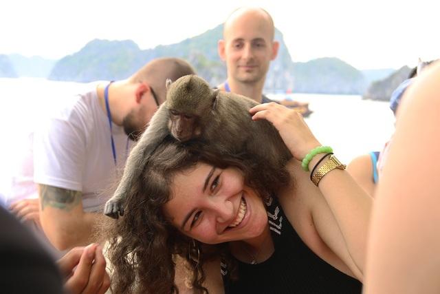 Du khách nước ngoài thích thú vui đùa với những chú khỉ trên đảo.