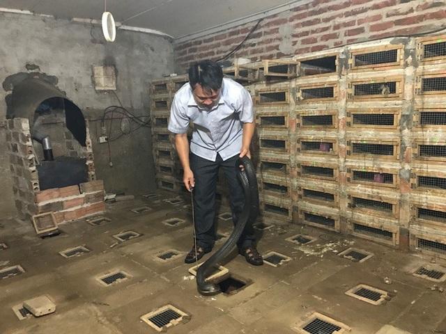Trừ chi phí, mỗi năm gia đình anh Hạ Văn Trị, Bí thư Đoàn xã Vĩnh Sơn (Vĩnh Tường) thu nhập hơn 1 tỷ đồng từ nghề nuôi rắn.