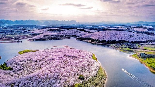 Vẻ đẹp khó tin của hòn đảo nhân tạo phủ kín hoa anh đào