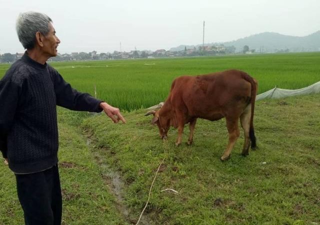 Việc thu tiền phí cỏ khiến người dân bức xúc