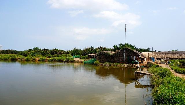 Khu đất 30ha vẫn còn nhiều chỗ là đầm lầy chưa được san lấp.