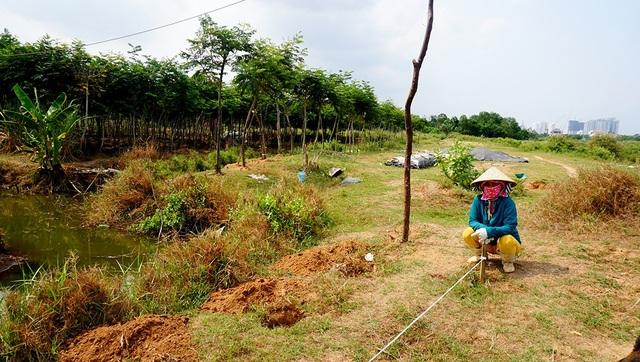 Những công nhân được thuê trồng cây bên trong khu đất.