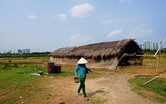 Người dân sống trên khu đất chủ yếu chăn nuôi.