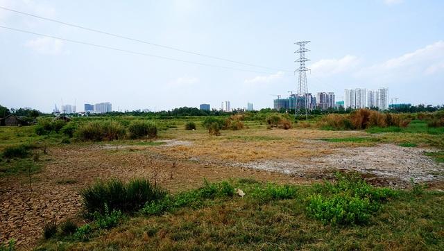 Trước đây, khu đất 30ha được người dân khai hoang để trồng lúa nước.
