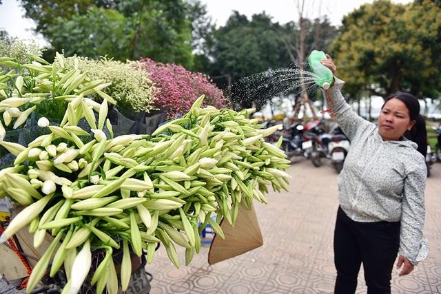 Ở Hà Nội, hoa loa kèn được bán nhiều ở các phố Phan Đình Phùng, Kim Mã, Láng Hạ… Những bông hoa trắng muốt được xếp thành bó lớn, chở trên những gánh hàng rong tạo nên nét chấm phá riêng cho Hà Nội.