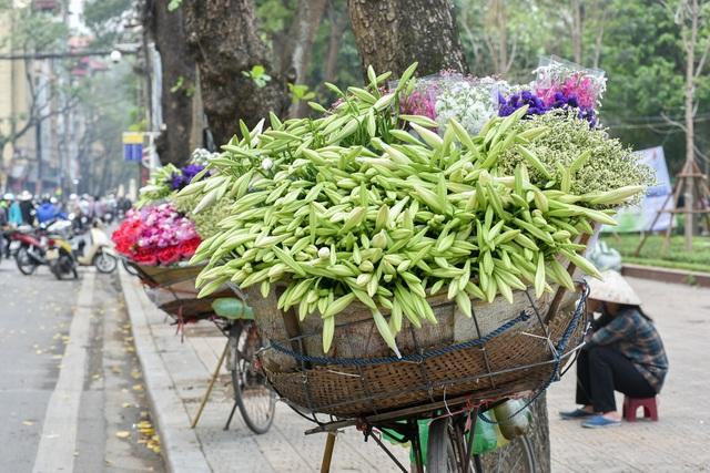 Tháng 4 về trên khắp con đường, ngõ phố ở Hà Nội lại ngập tràn sắc trắng tinh khôi của loa kèn. Loài hoa này còn được gọi là hoa huệ tây hoặc hoa bách hợp và được xem là loài hoa báo hiệu mùa hè về.