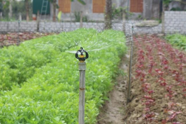 Hệ thống bét tưới phục vụ hiệu quả cho rau màu