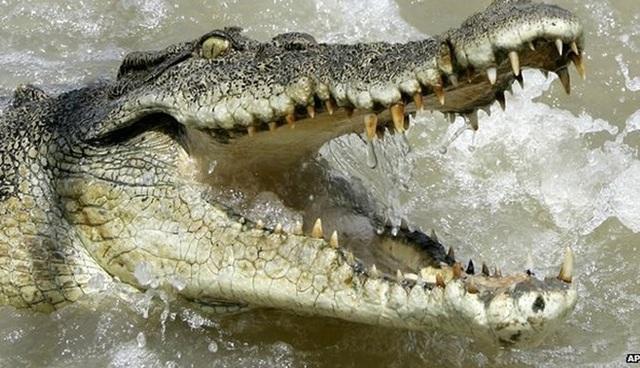 Du khách nam may mắn thoát chết dù rơi xuống hồ nước đầy cá sấu