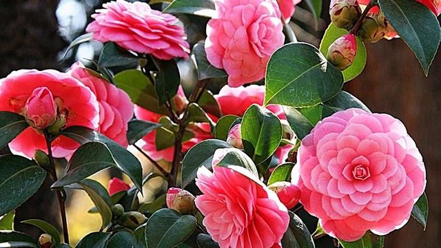 """Loài hoa đẹp không tì vết """"vạn người mê"""" khiến dân mạng điên đảo - 4"""