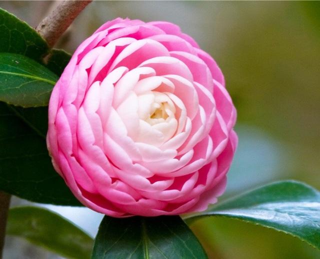 """Loài hoa đẹp không tì vết """"vạn người mê"""" khiến dân mạng điên đảo - 5"""