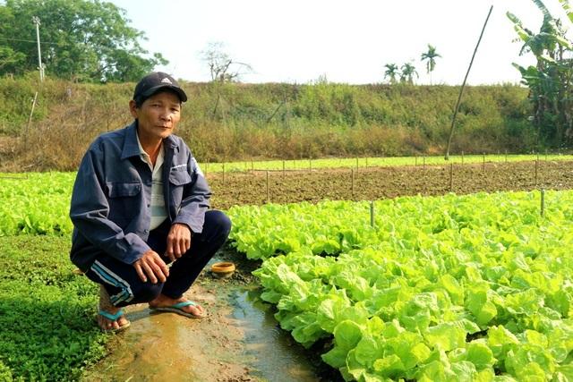 Với 2.000m² đất sản xuất rau an toàn đã mang lại nguồn thu nhập cao cho gia đình ông Năm.