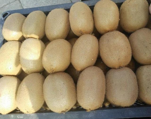Kiwi Trung Quốc đang được rao bán buôn với giá khá rẻ