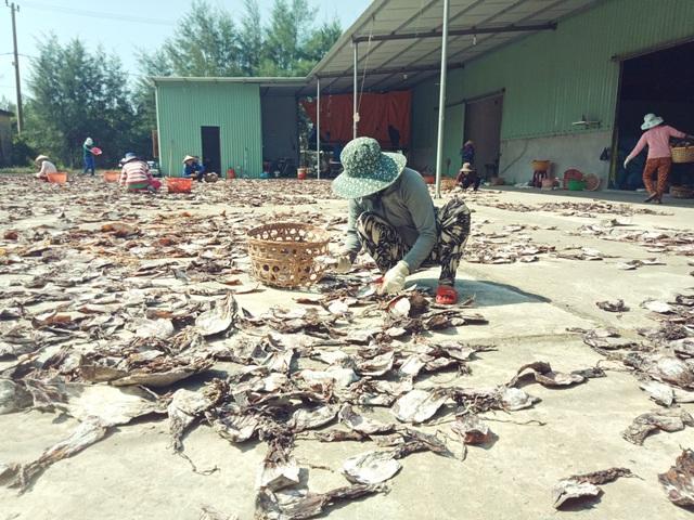 Công nhân đang phơi mực khô ở cảng An Hòa để xuất khẩu