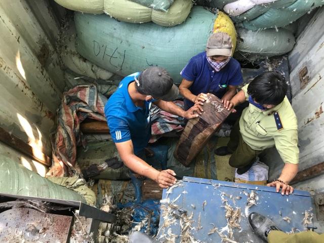 Số gỗ trắc bị lực lượng chức năng phát hiện trong xe tải, dưới các bao tải chứa lông vịt