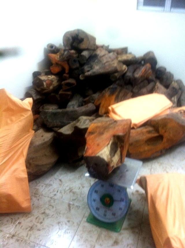 Chi cục Hải quan của khẩu Nam Giang đang cân số gỗ trắc nhập lậu từ Lào