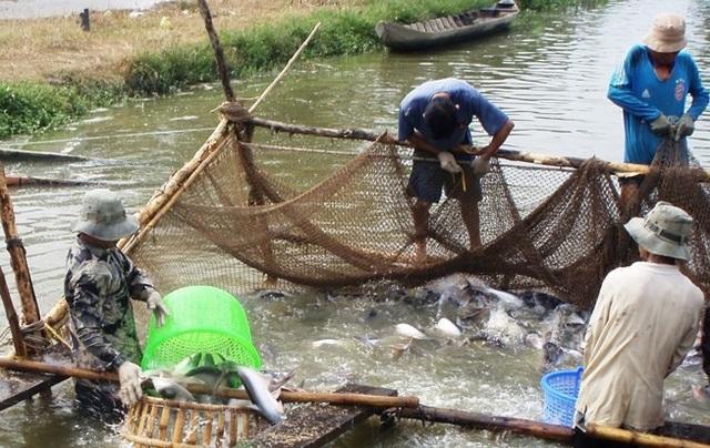 Trung Quốc đã vượt Mỹ trở thành thị trường nhập khẩu cá tra lớn nhất của Việt Nam.