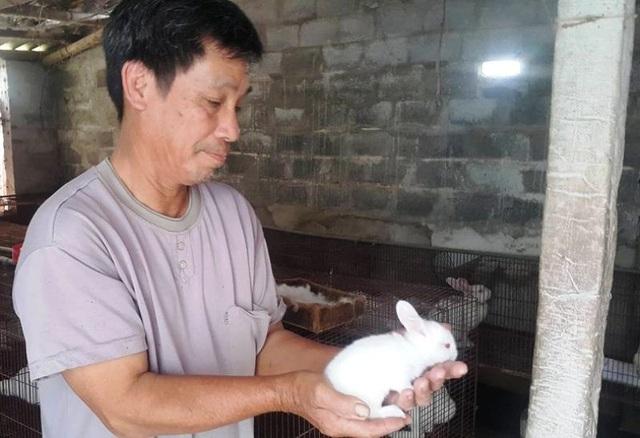 Thỏ New Zealand mắn đẻ, đẻ nhiều, dễ nuôi, giá thịt cao nên được gọi là con đẻ ra tiền của gia đình ông Linh.