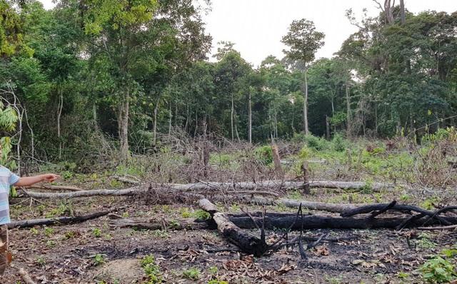 Tại hiện trường có dấu vết của việc chặt hạ cây rừng để khô rồi đốt để chiếm đất...