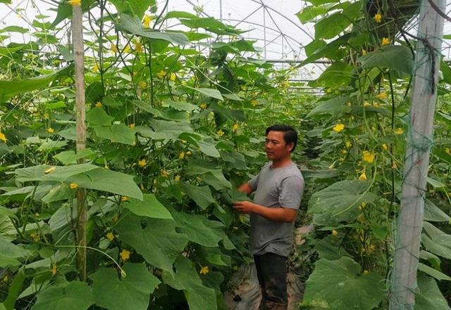 Chàng kỹ sư cơ khí Dũng ngày nào giờ thành ông chủ vườn rau VietGAP cho thu nhập tiền tỷ mỗi năm.