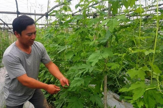 Ngoài thu nhập cao từ trồng rau, anh Dũng còn giúp người dân địa phương có thêm thu nhập, bỏ qua định kiến khó làm giàu từ nông nghiệp trên quê hương mình.