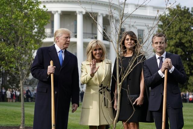 Cây sồi non là món quà đặc biệt của Tổng thống Macron trong chuyến thăm tới Mỹ (Ảnh: Reuters)