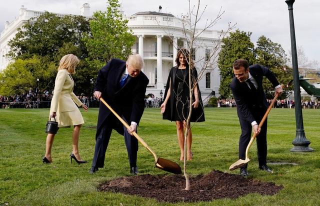 Tổng thống Trump và Tổng thống Macron trồng cây tại bãi cỏ ở Nhà Trắng (Ảnh: Reuters)
