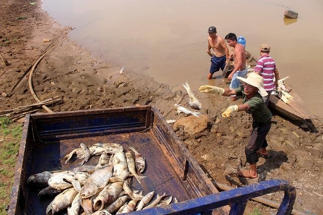 Tìm ra nguyên nhân khiến hàng chục tấn cá chết trắng hồ thủy lợi - 2