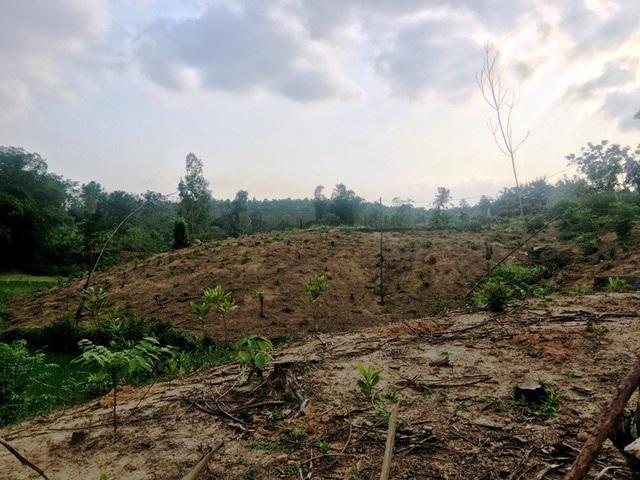 Những đồi keo non đã được phá bỏ để nhường đất cho dự án