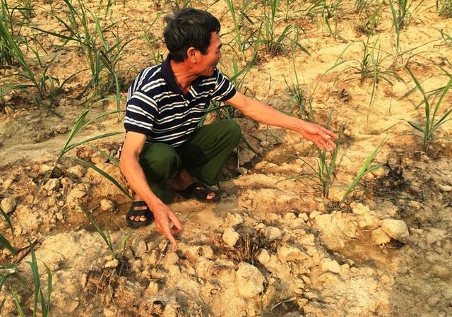 Thời vụ và năng suất cây trồng của người dân bị ảnh hưởng lớn