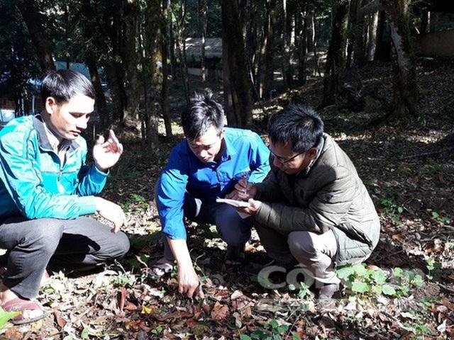Việc bảo vệ các loài sâm trên núi Ngọc Linh rất nghiêm ngặt