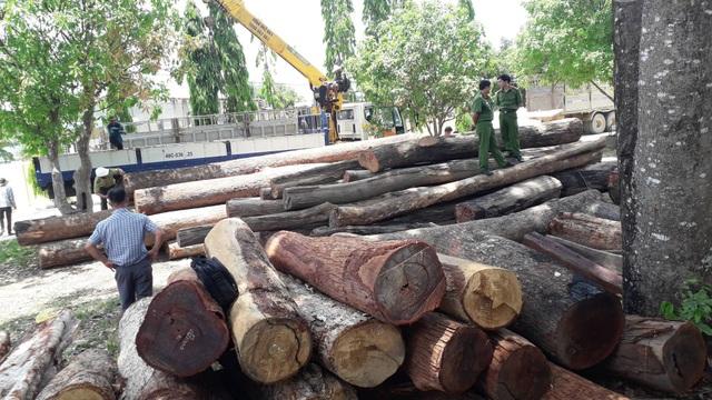 Số lượng gỗ lậu khủng của Phượng râu bị phát hiện, bắt giữ