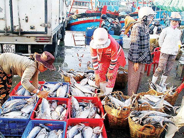 Vẫn có 18 cơ sở thu mua hải sản có địa chỉ tại cảng Nhật Lệ, phường Phú Hải, TP Đồng Hới khiếu nại và không đồng ý với cách giải quyết của địa phương. (Ảnh minh hoạ)