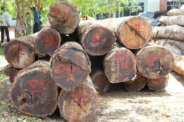 Cơ quan chức năng kiểm đếm số gỗ lậu trong xưởng của Phượng râu