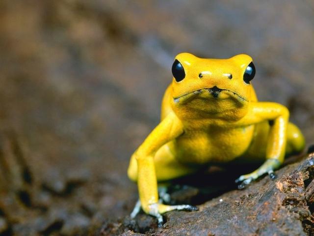 10 loài động vật nguy hiểm nhất thế giới - 3
