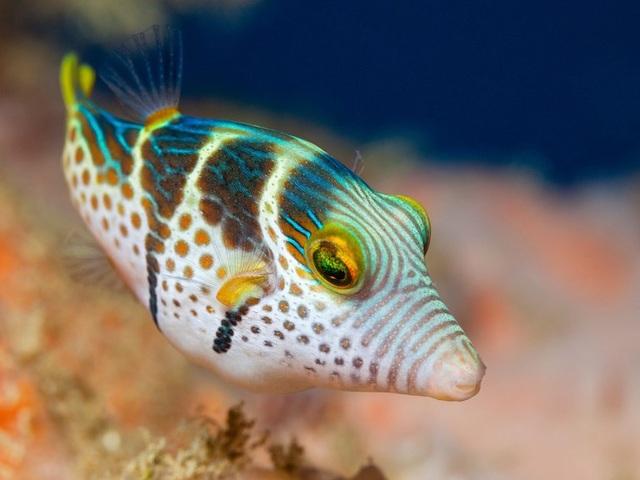 10 loài động vật nguy hiểm nhất thế giới - 5