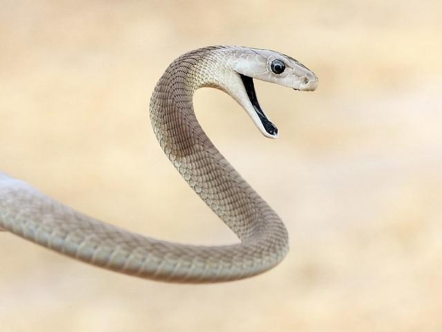 10 loài động vật nguy hiểm nhất thế giới - 6