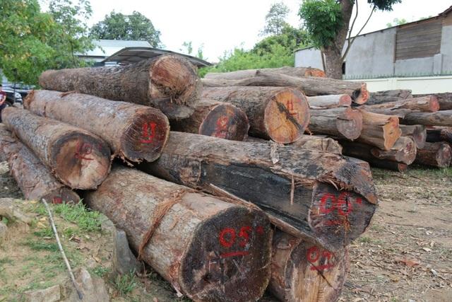 Tang vật bị lực lượng chức năng thu giữ gồm nhiều cây gỗ tròn