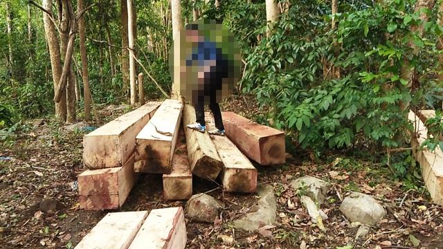 Bãi gỗ thứ hai có khoảng hơn 20 chục lóng gỗ xếp gọn chờ vận chuyển